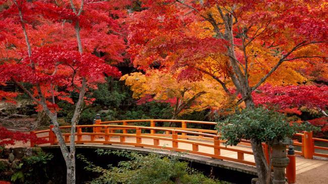 Pont Japonais dans un jardin